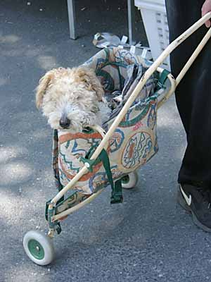Jeannie in her walker